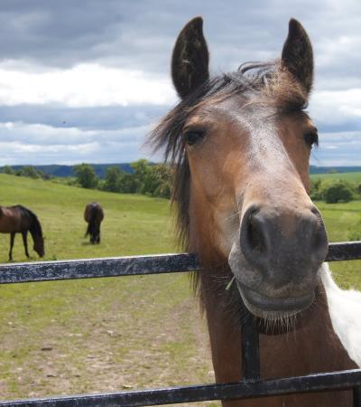 Horses at Redwings Horse Sanctuary Mountains in Forfar
