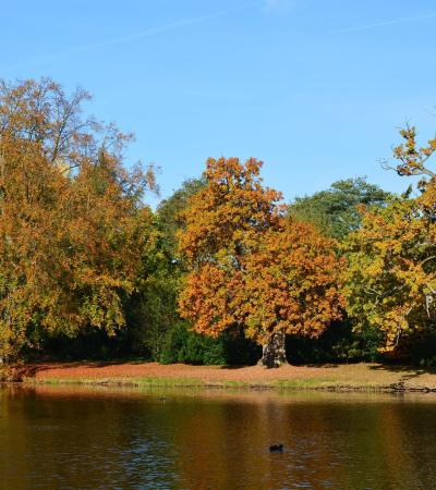 Lake at Painshill Park in Cobham
