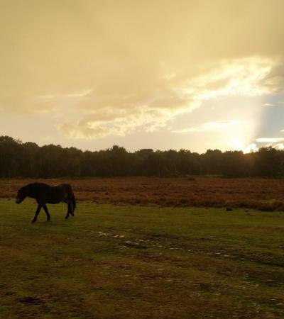 Horses at Knettishall Heath Country Park in Thetford