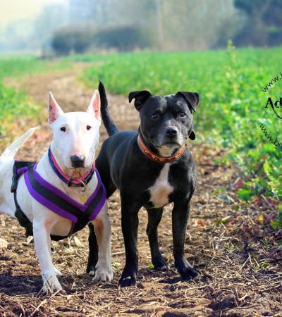 Dogs at HULA Animal Rescue in Milton Keynes