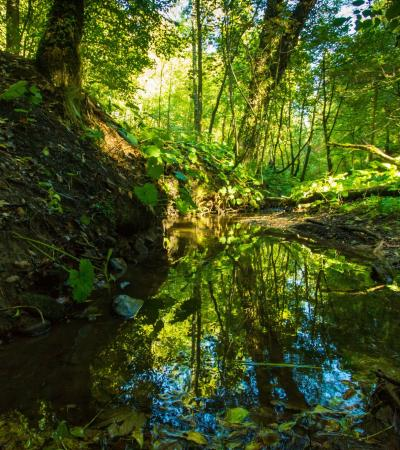 Creek at Cotton Dell in Stoke on Trent