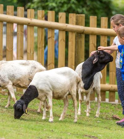 Kids petting sheep at Woburn Safari Park in Milton Keynes