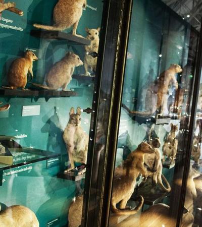Exhibition room at Natural History Museum at Tring