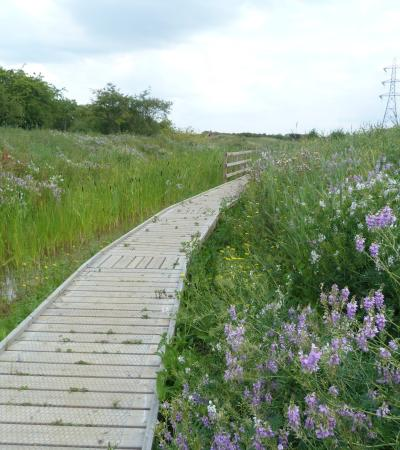 Walking path at Wat Tyler Country Park in Basildon