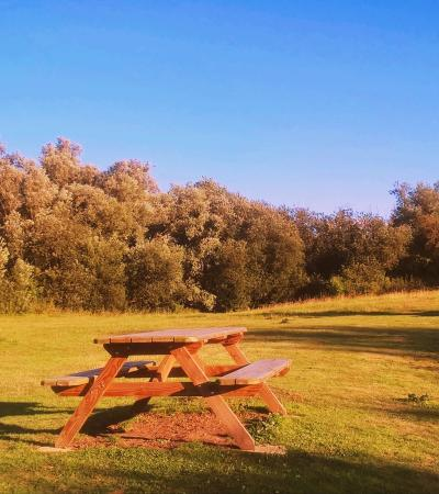 Picnic field at Long Melford Country Park