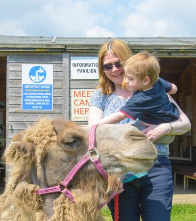 Mum and son pet camel at Oasis Camel Centre in Halesworth