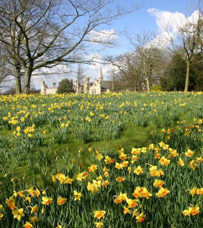 Daffodil garden at Burghley House and Garden of Surprises in Stamford