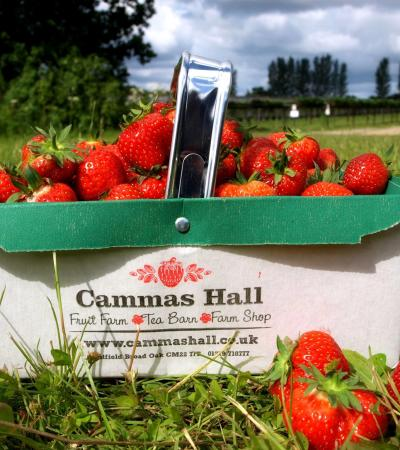 Basket of strawberries at Cammas Hall Farm in Bishops Stortford