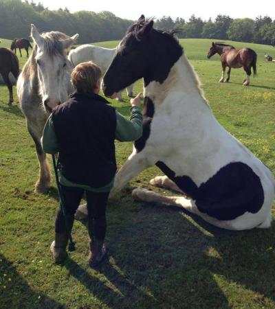 Person with horses at Lulworth Equestrian Centre in Wareham
