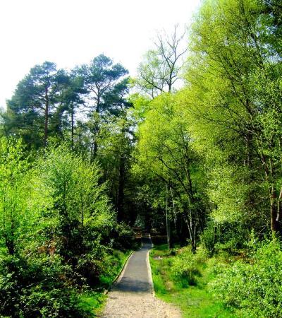 Path in Burnham Beeches