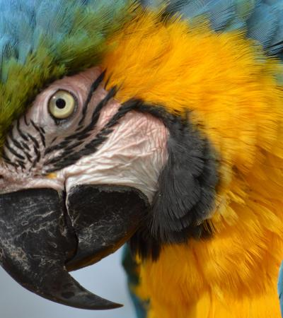 Macaw Parrot at Tropical Birdland in Desford
