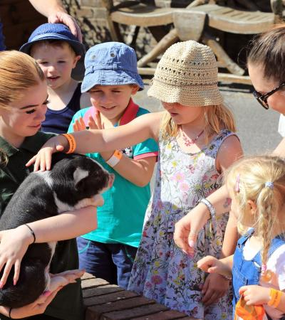 Kids petting piglet at Old MacDonalds Farm & Fun Park in Padstow