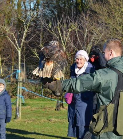 Hawk at Willows Bird of Prey Centre in Knockholt