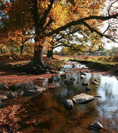 River at Bradgate Park in Leicester