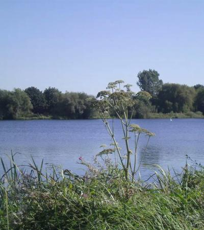 Lake at Emberton Country Park