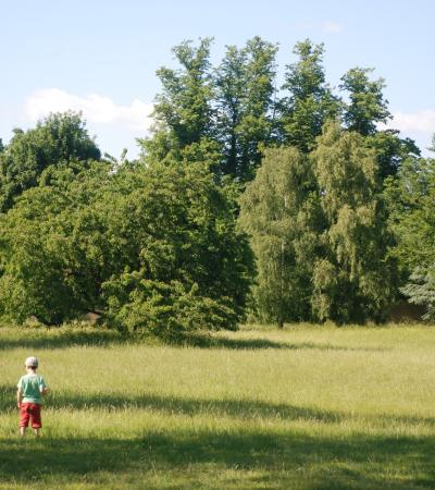 Boys at Wandlebury Country Park in Cambridge