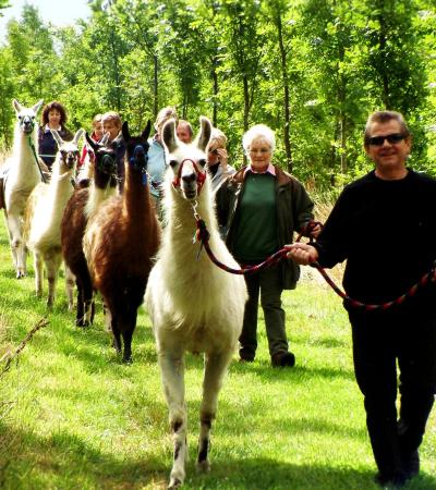 People with llamas at Catanger Llama Trekking in Towcester