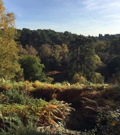 Landscape at Rushmere Country Park in Heath and Reach