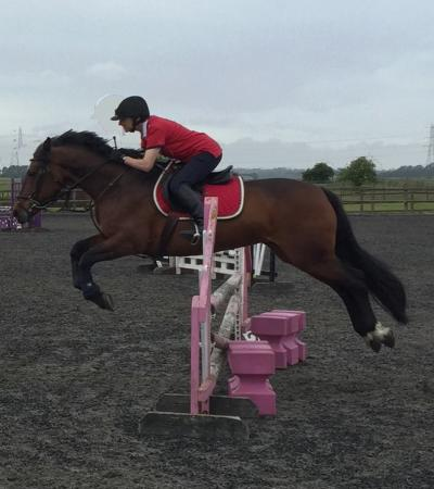 Horse and rider jumping at Witcham Equestrian Centre in Ely