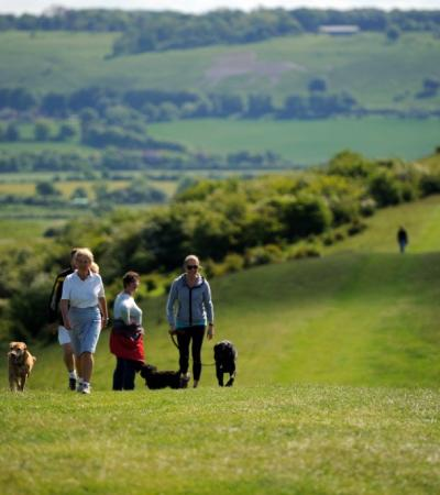 People walking dogs at Ashridge Estate in Berkhamsted