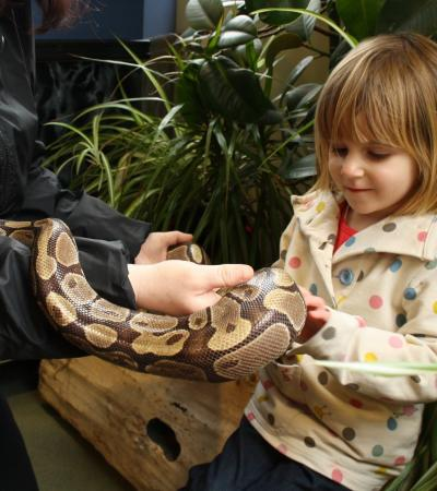 Girl petting snake at Africa Alive in Lowestoft