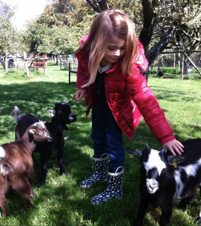 Girl stroking goat at Baylham House Rare Breeds Farm in Ipswich
