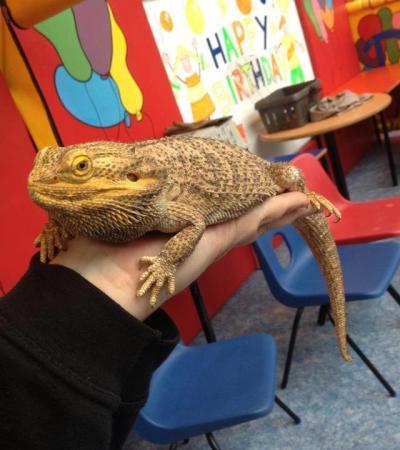 Lizard at Playpit Nuneaton