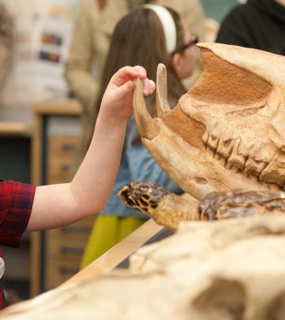 Girl touching skull at World Museum Liverpool