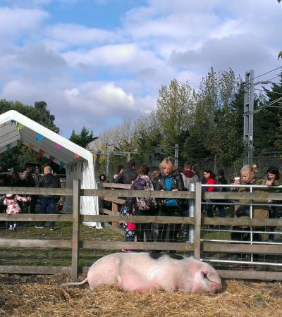 Kentish Town City Farm