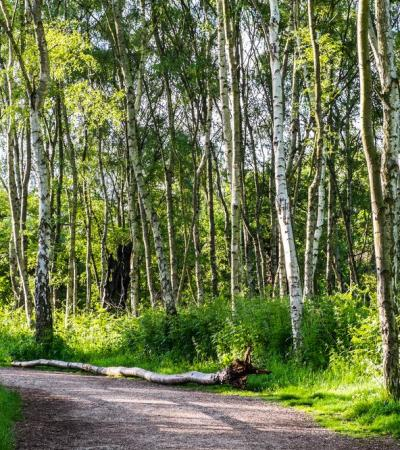 Walking path at Sherwood Forest Country Park in Edwinstowe