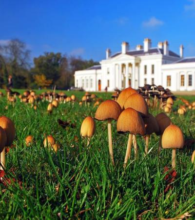 Mushrooms at Hylands House and Park in Chelmsford