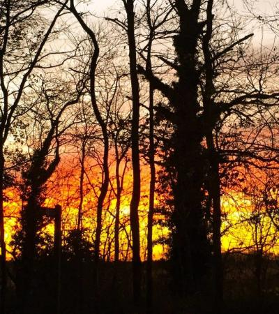 Sunset at Sandall Beat Wood in Doncaster