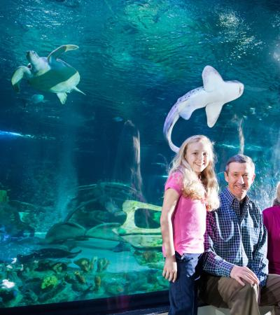 Family by fish tank at SEA LIFE Manchester
