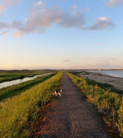 Dog on walking trail at Cudmore Grove Country Park in East Mersea