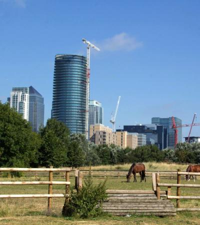 Horses at Mudchute Park and Farm in Isle of Dogs