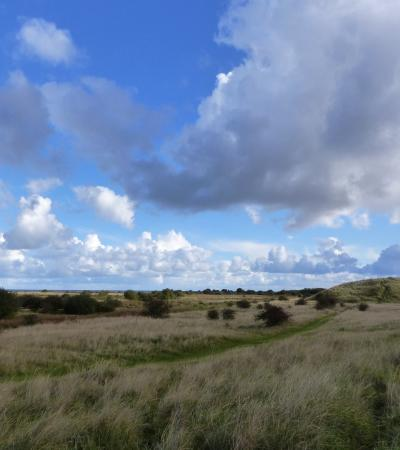 Field of Donna Nook Nature Reserve in Louth
