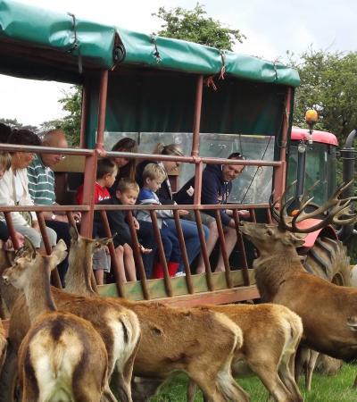 Families feeding deer at Snettisham Park in Kings Lynn