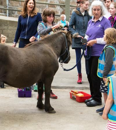 Kids caring for pony at Belwade Farm World Horse Welfare in Aboyne