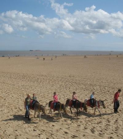 Donkeys at Great Yarmouth Pier Beach, Great Yarmouth