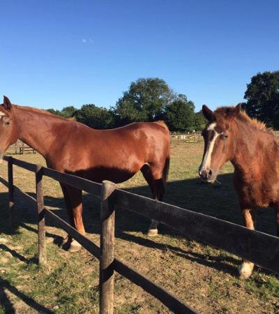 Horses at Hopefield Animal Sanctuary in Brentwood