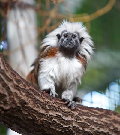 Monkey at Plantasia Atherstone