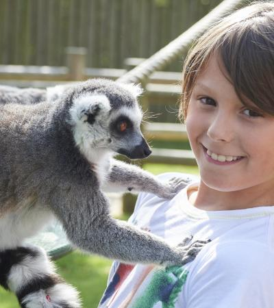 A little boy with a lemur at Drusillas Park in East Sussex