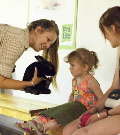 Girl looking at rabbit at Kent Life in Maidstone