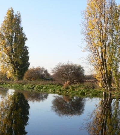 A photo of Tottenham Marshes
