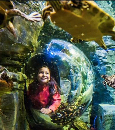 A little girl looking at some animals at SEA LIFE Brighton
