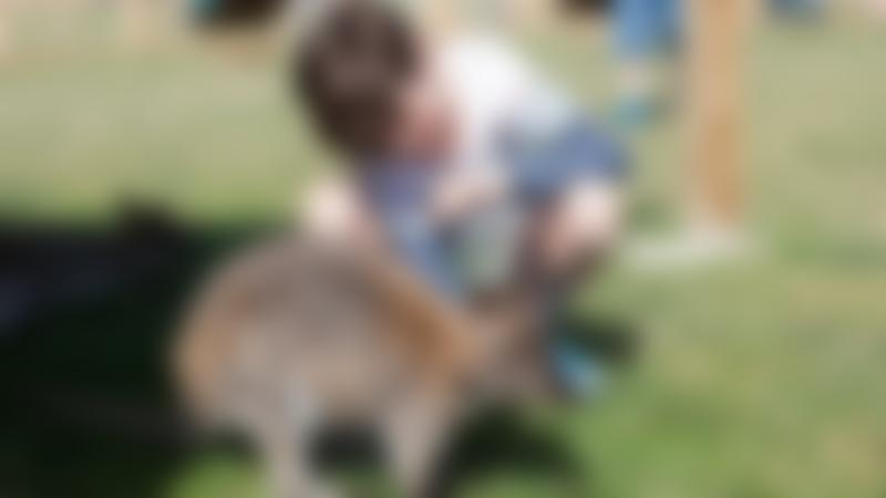 Boy petting wallaby at Tapnell Farm Park in Yarmouth