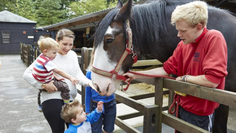 Family petting horse at Chatsworth House & Farmyard in Bakewell