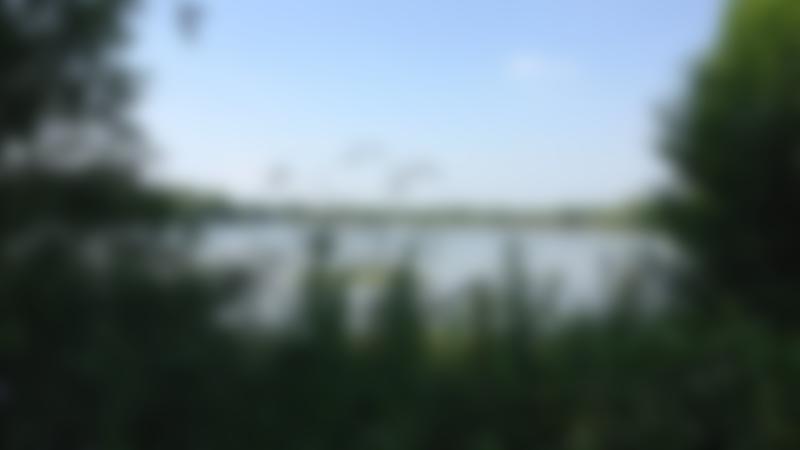 Lake at Aldenham Country Park in Elstree