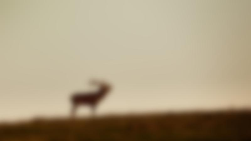 Stag at Red Deer Range Trail in Newton Stewart