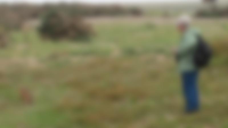 Men watching rabbit at Havergate Island in Aldeburgh